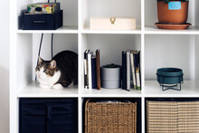 Adorable Cat With Attentive Gaze Looking Away While Lying On Shelf At Home In Daytime