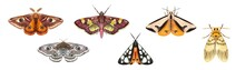 Watercolor Set Of Hand Drawn Moth, Butterflies Isolated On White Background.