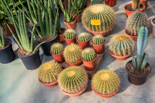 From Above Of Assorted Cactuses Growing In Plastic Pots In Modern Garden Center