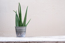 Green Aloe Vera Leaves Placed In Jar On Table On White Background