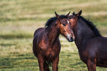 Graceful Horsed Caressing On Blurred Background Of Meadow With Fresh Verdant Grass In Daytime