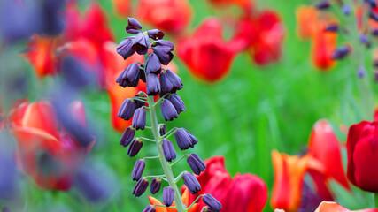 Piękny fioletowy kwiatek na zielono czerwonym tle.