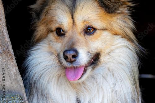 Fotografie, Obraz Closeup portrait of cute mutt dog