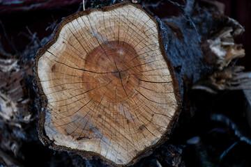 Osobliwy kloc drewna śliwkowego