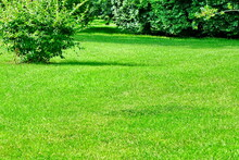 Backyard Garden Park Shady Fresh Lawn Green Background Or Texture. Lawn Made From Turf Or Sod. Focus Selective.