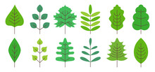 Simple Flat Style, Vector Illustration For Scrapbooking, Notebook, Dishes. Realistic Colorful Spring, Summer Leaves Isolated On White Background. Oak, Linden, Birch And Maple. Flat Style, Vector.Tree