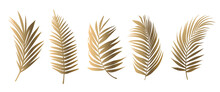 Beautiful Gold Palm Tree Leaf Set Silhouette Background Vector Illustration