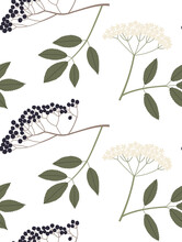 Sambucus Or Elderberry Vector Seamless Pattern With Branches, Leaves And Berries Color Hand Drawn Illustration. Isolated On White Background.
