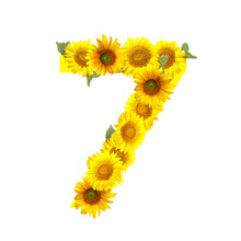 Figure 7 Made Of Beautiful Sunflowers On White Background