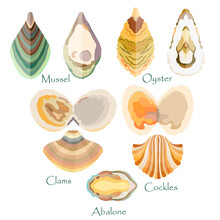 Set With Edible Mollusks Made In Flat Style