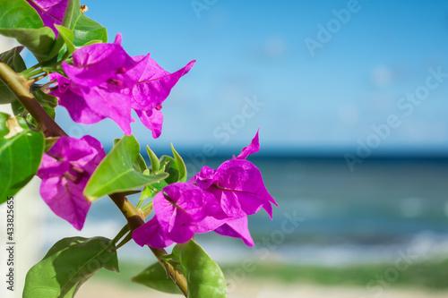 Purple bougainvillaea flowers in front of Mediterranean sea background Fotobehang