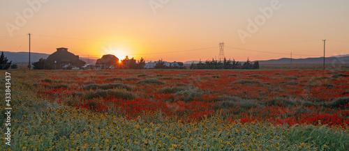 Canvas-taulu California Golden Orange Poppies at sunset dusk twilight in the high desert of s