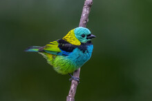 Seven Colors On Bird