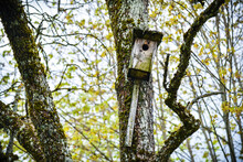 Old Birdhouse Covered With Moss On A Tree In The Park.