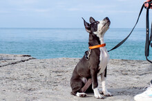 Dog Training And Obedience. Dog At The Sea.