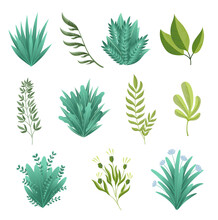 Greenery Branches. Green Realistic Spring Grasss. Leafs Of Exotic Plant Collection Of Tropical Abstract Isolated Symbols. Different Patterns Of Natural Lawn Meadow Bushes