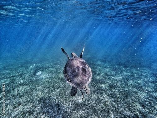 Sea turtle with sun rays - fototapety na wymiar