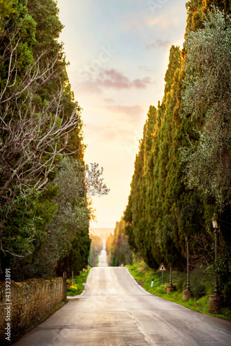 Canvas Bolgheri famous cypresses trees straight boulevard landscape