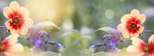 Nice Flowers Panorama Of Dahlian Moonfirein Sunlight