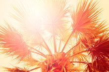 Sun Rays Through The Palm Tree Leaves, Sunrise Or Sunset Scenery. Idea Of The Holidays And Summertime