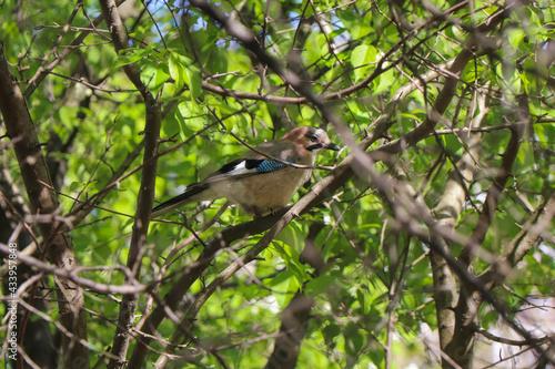 dziki ptak wśród drzew - fototapety na wymiar