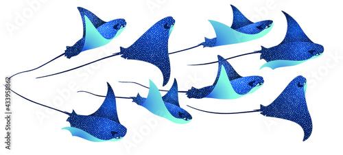 Fotografie, Obraz Devilfish marine animals, manta ray fishes, sea creatures set vector illustration
