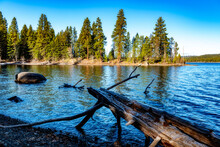 Idaho State Ponderosa Park With Tree Hanging Over The Lake