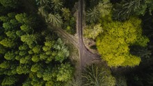 Forest Drone Shot