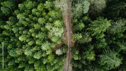 Fotografiet Forest drone shot