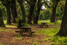 Pic-nic Tables In The Woods Among The Trees In The Capodimonte Italian Park In Naples