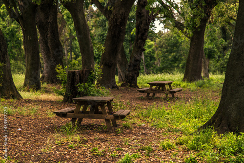 Fotografie, Obraz pic-nic tables in the woods among the trees in the Capodimonte Italian park in N