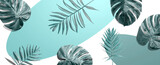 Tropical palm leaves from above - 433983254