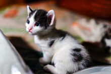 Cute Kitten Waking Up And Looking Around