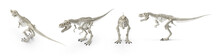 Tyrannosaurus Rex Skeleton Large Carnivorous Bipedal Dinosaur Having Enormous Teeth With Knife-like Serrations. Isolated White Background 3d Illustration Different Angle View Realistic Set