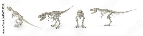 Foto Tyrannosaurus rex skeleton large carnivorous bipedal dinosaur having enormous teeth with knife-like serrations