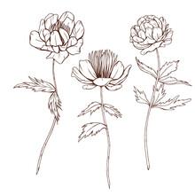 Black Line Art Flowers, Wild Flowers Sketch, Trollius Helleborum, Line Art Botanica, Flowers With Stems, Black Flowers Illustration
