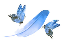 Beautiful Color Feather And Butterfly Isolated On White Background