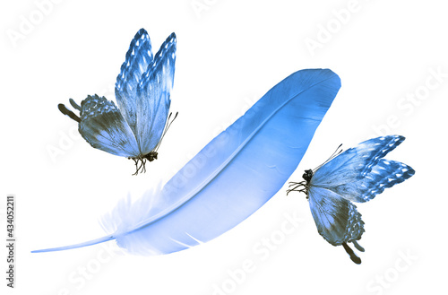 Beautiful color feather and butterfly isolated on white background - fototapety na wymiar