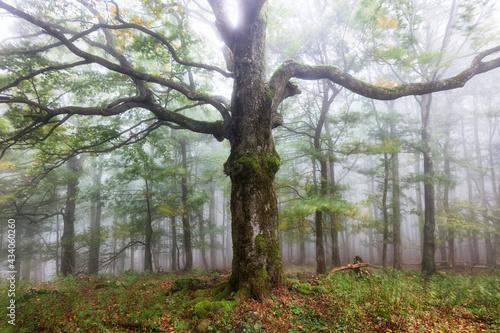 Obraz na plátně Misty autumn forest after rain