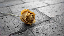 Yellow Rose Laying On A Brick Paving Area