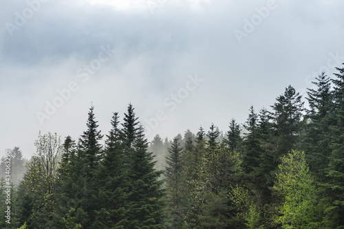 drzewa we mgle - fototapety na wymiar