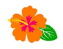 Hibiscus Flower, Hawaiian Tropical Plant
