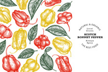 Hand Drawn Sketch Style Scotch Bonnet Pepper Banner. Organic Fresh Vegetable Vector Illustration. Retro Cayenne Pepper Design Template