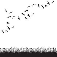 Isolated, A Flock Of Birds Flies In Nature