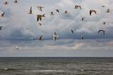 Fototapeta Fototapety z morzem do Twojej sypialni - Ptaki mewy Morze bałtyckie