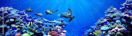 Leinwand Poster Panorama background of male Sea turtles chasing female sea turtle in beautiful c