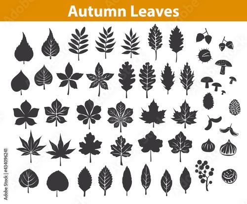 Fotografiet autumn fall leaves silhouettes set in black color, maple chestnut ash oak birch gum beech walnut rowan elm trees foliage