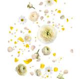 Fototapeta Kawa jest smaczna - Beautiful flowers and petals flying on white background