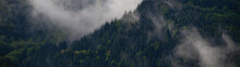 Black Forest Background Banner - Moody Forest Landscape Panorama With Fog Mist And Fir Trees In The Foggy Morning Dawn