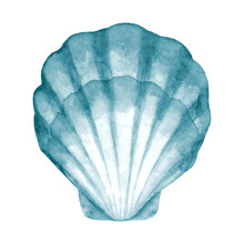 Seashell Watercolor Illustration. Watercolor Hand Drawn Sea Shell Isolated On White Background